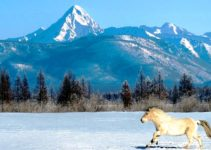 mongolia-winter